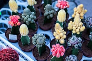 Cactus in different types and colours
