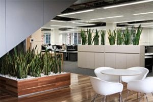 Clean office with natural plants